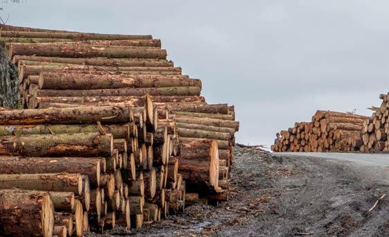leverancier-duurzaam-finti-hout